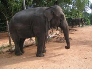 הפיל והקרקס - פשוט לי עם רלי
