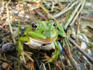 פשוט לי עם רלי - משל הצפרדע בבאר