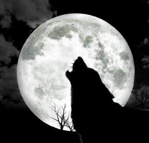 פשוט לי עם רלי - שני הזאבים